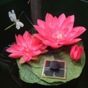lotus-libellule