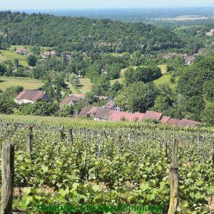 vigne-etoile2